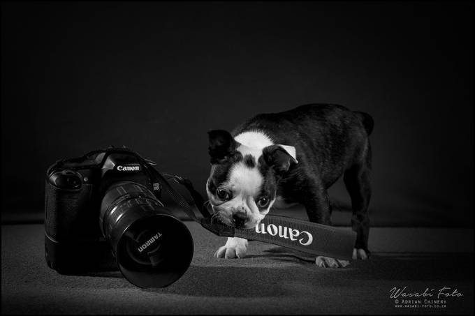 New Camera Assistant by adrianchinery - Dogs In Action Photo Contest