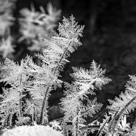 A particularly cold and windless night by a local stream produced some beautiful hoar frost.