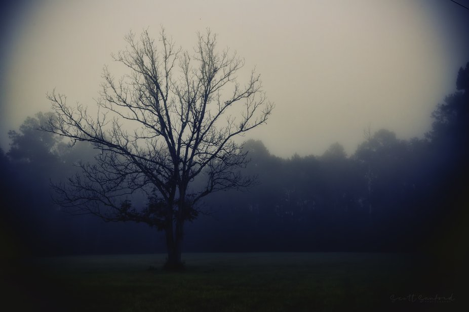 Early morning fog on a lonely tree.