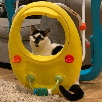 'Cat framed by upturned child walker'
