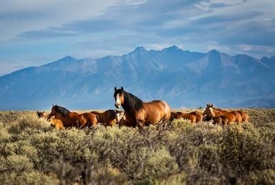 Mountain Mustangs