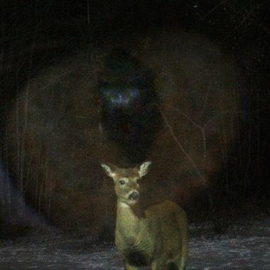 The life of a prey animal, It could sense something watching! Predator eye with deer overlay, night time deer photo