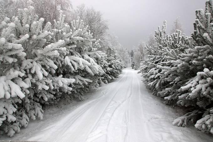 Forest path by virginijusjuozapavicius - Winter Roads Photo Contest
