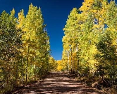 Backroads Fall