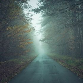 Misty, foggy forest's road.