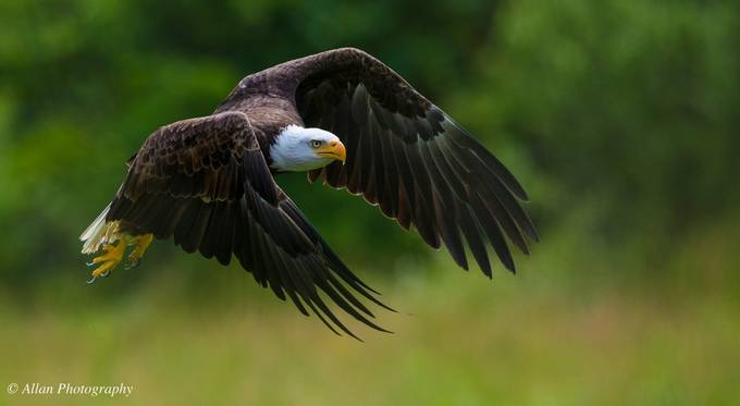 Eagles by ocnviewbug - Majestic Eagles Photo Contest