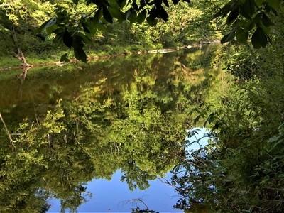 Shavers Fork River Reflection