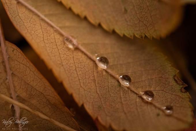 Droplet Symmetry