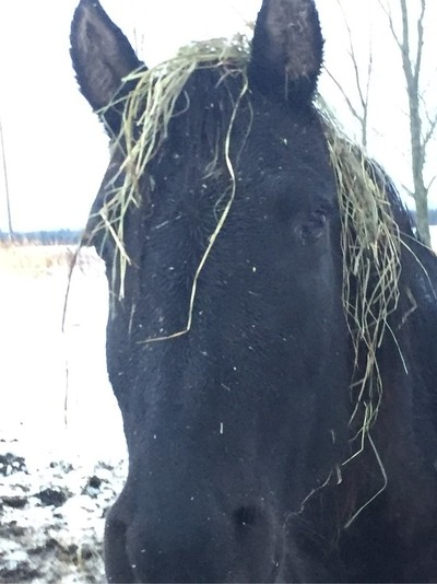 Funny Moment with horses some house keys and then she get the hay on her head like  a wig