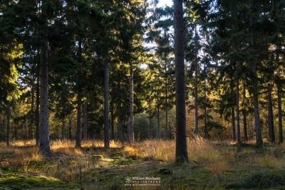 Autumn Forest Ballonzuilbossen