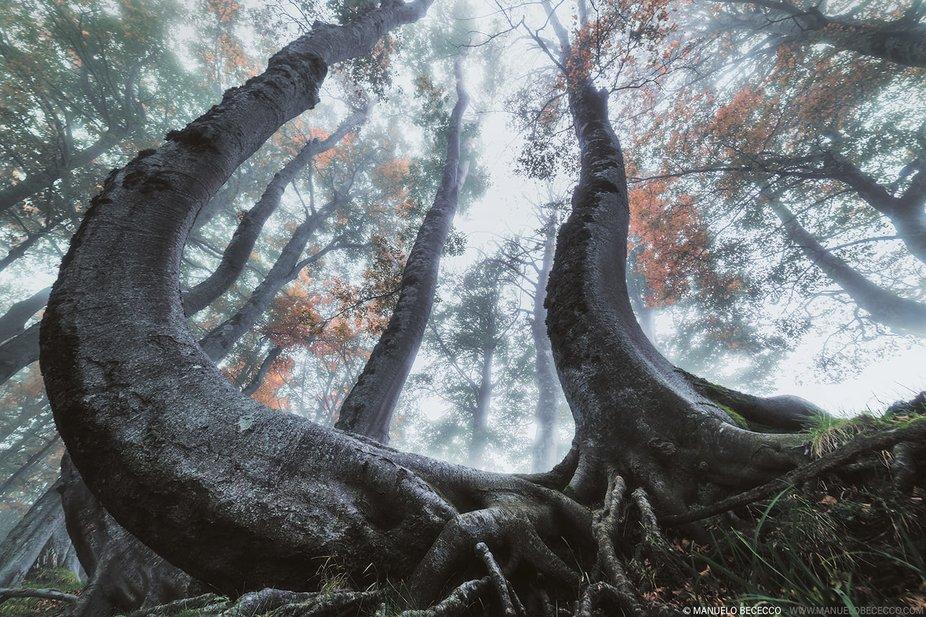 Comincia la stagione autunnale , cio che amo fotografare, ombre ,luci, forme e colori .