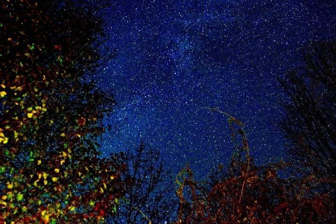 The vicinity of Cygnus.