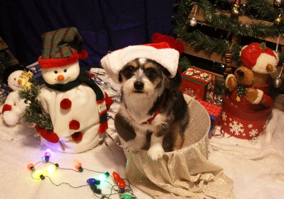 Merry Christmas from Maxy packy.