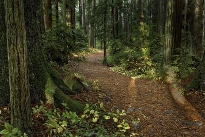 Sequoia Park Eureka Calif.