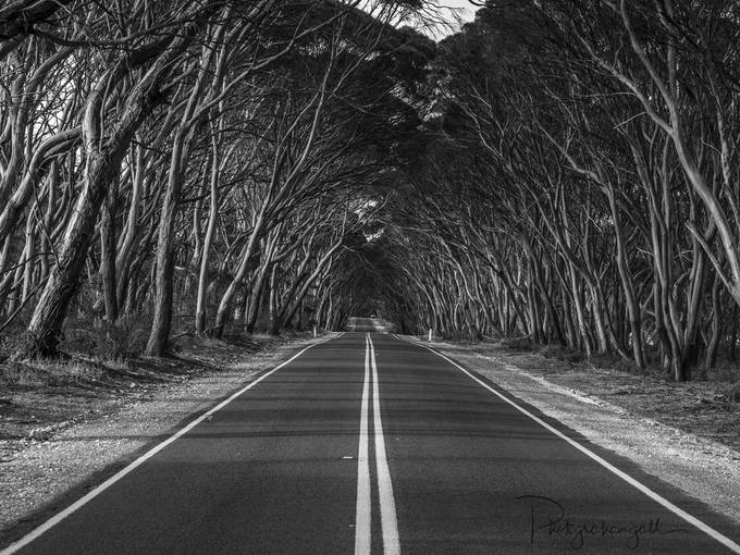 Double Line by grahamgall - Straight Roads Photo Contest