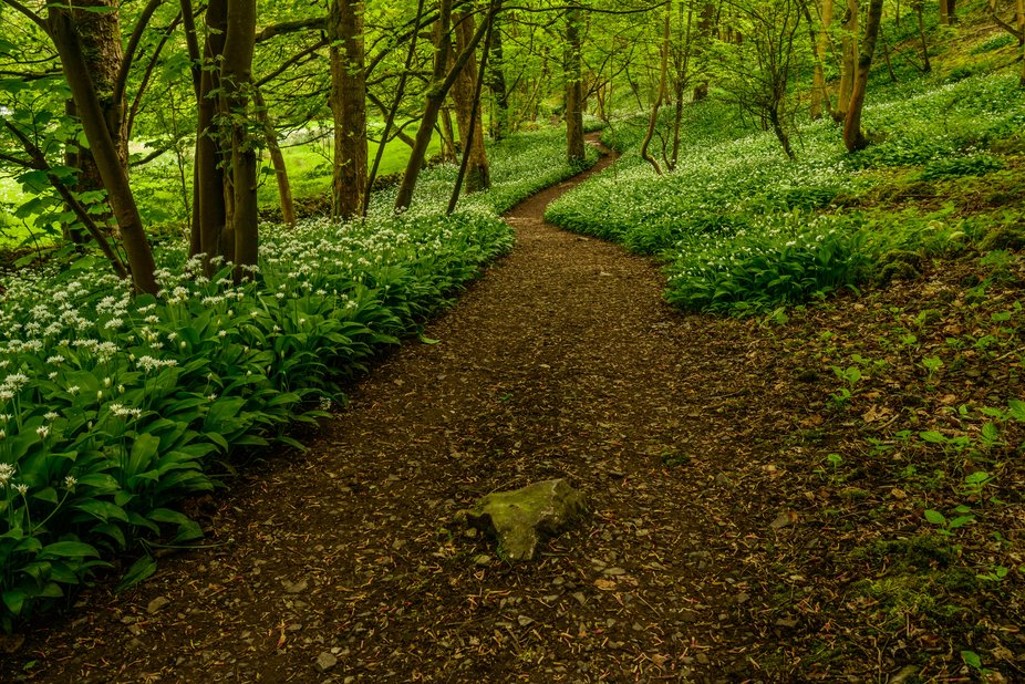 Great Shakleton woods in late spring,
