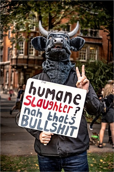 Humane Slaughter?