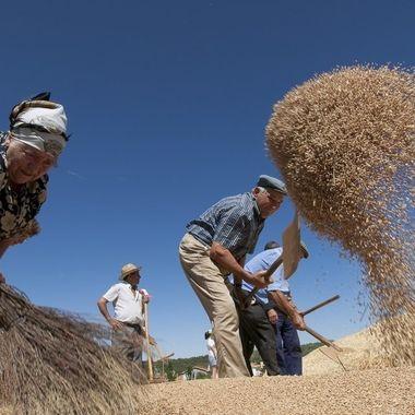 En la agricultura tradicional se utilizaba el viento para separar el grano de la paja