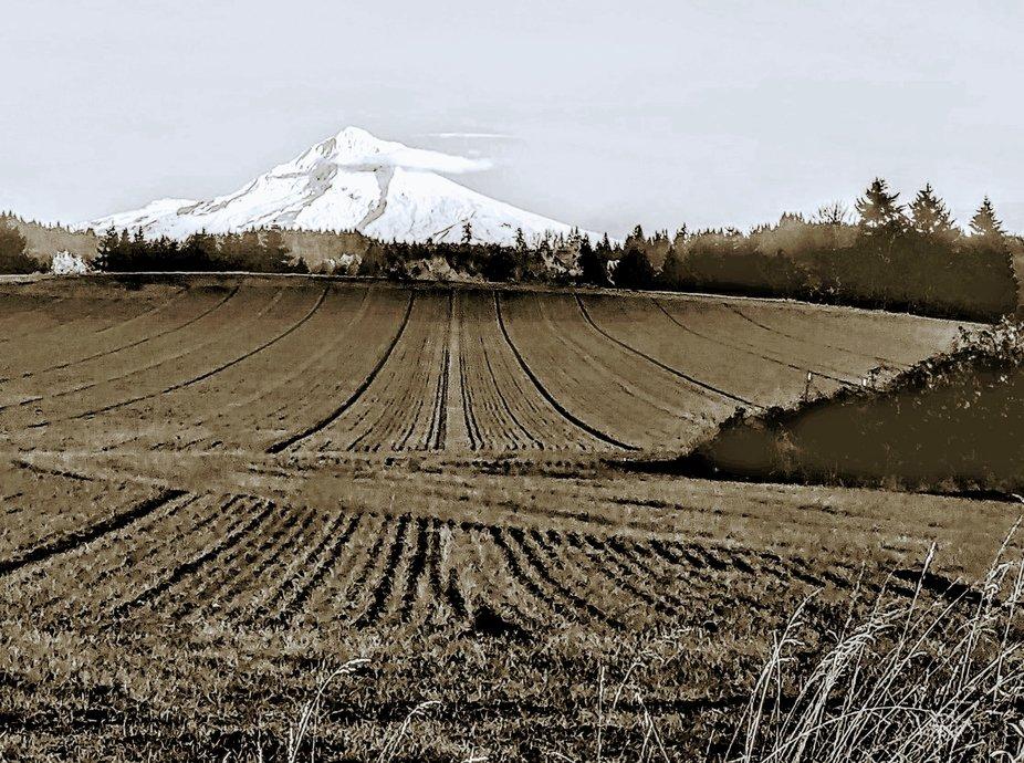 Mt Hood Farmland