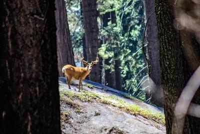 Deer in the Tree Lights