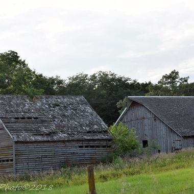 We live in a predominantly rural area.   This is all that is left of an abandoned farmstead.