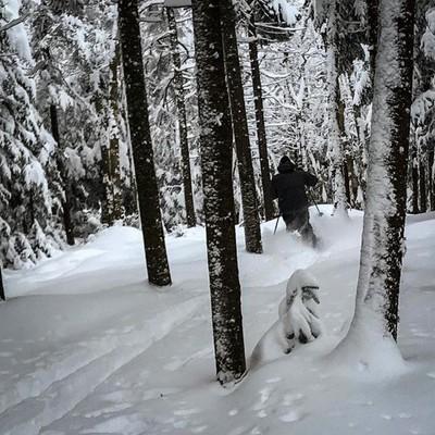 First tracks.  #skiing #adk #glades #woods #deepsnow #firsttracks #mib #powder @nyskiblog #freshies #telemark #freeheellife #skitheeast #telemarkskiing #got_greatshots #ourplanetdaily #fotosforyou_rk #fotocatchers #tree_captures #zonephotographer