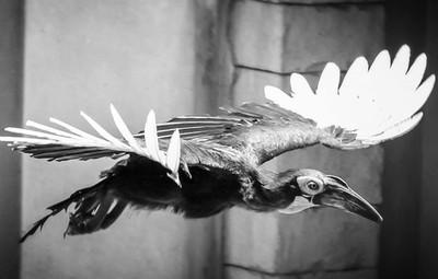 #animal_captures #animals_in_world #splendid_animals #animals_captures #animal_fanatics #animalelite #animal_sultans #animal_sultans #wildlifephotography #wildlifephotography #birdphotography #wildlifephoto #wildlifelovers #earthfocus #wildlifeplanet #wil