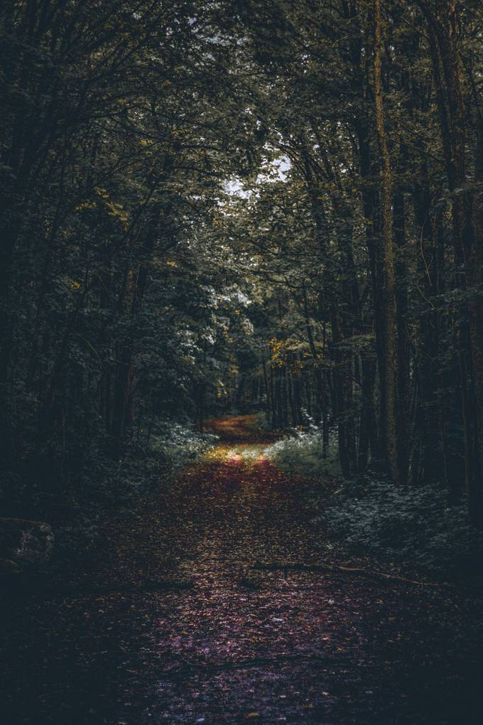 this image was shot in the woodlands near northern Ontario, when I took the shot was bright and sunny with little tweaking was able to project the right feel for the forest. Hope you guys like it.