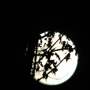 Full Beaver Moon Or Frost Moon