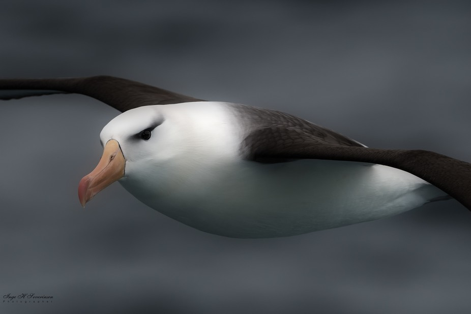 Shot in & around South Orkney Island ... (SGSSI)