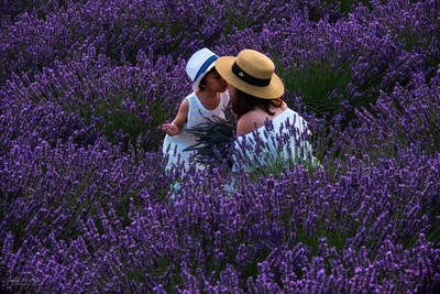 Lost_In_Lavender