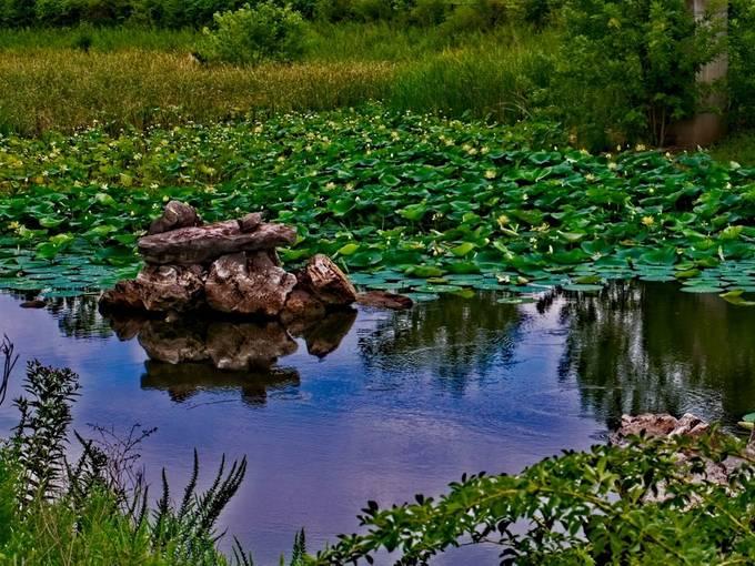 A Walmart pond in Harrison, Arkansas