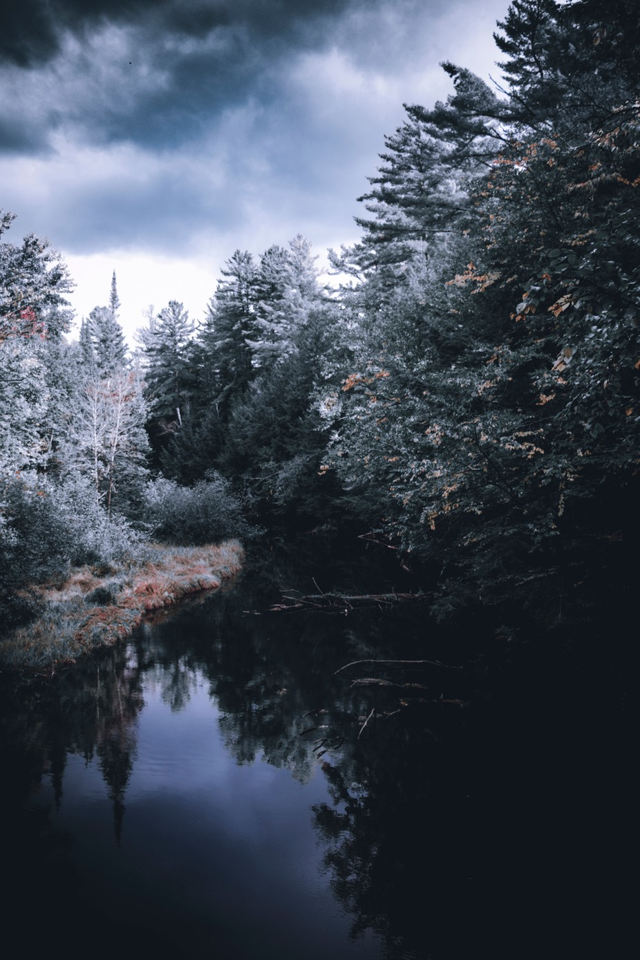 Mystical forest by A_Shukla - Tall Trees Photo Contest