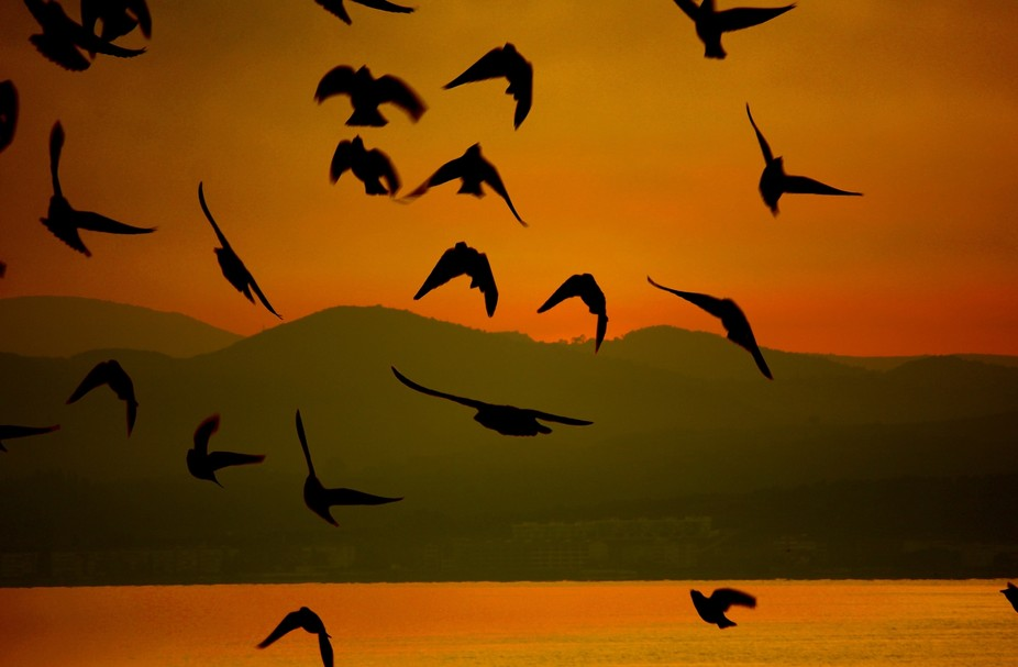 Flock of birds at sunset by the seashore, three of which smiling at us...