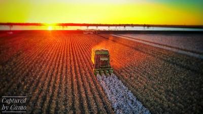 Cotton harvest. NSW Australia