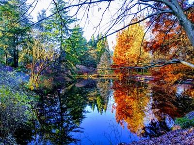 Heron Lake Reflections