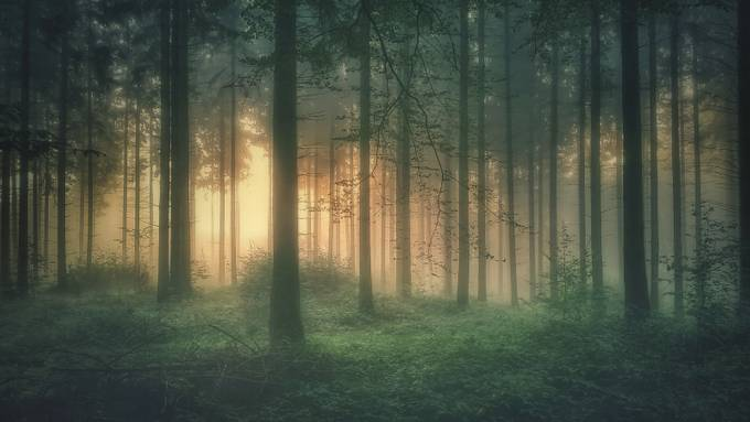 Mystic Forest by guykrier - Tall Trees Photo Contest