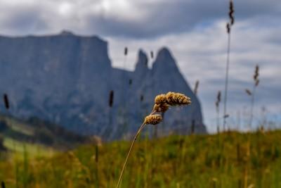 High Altitude Wheat