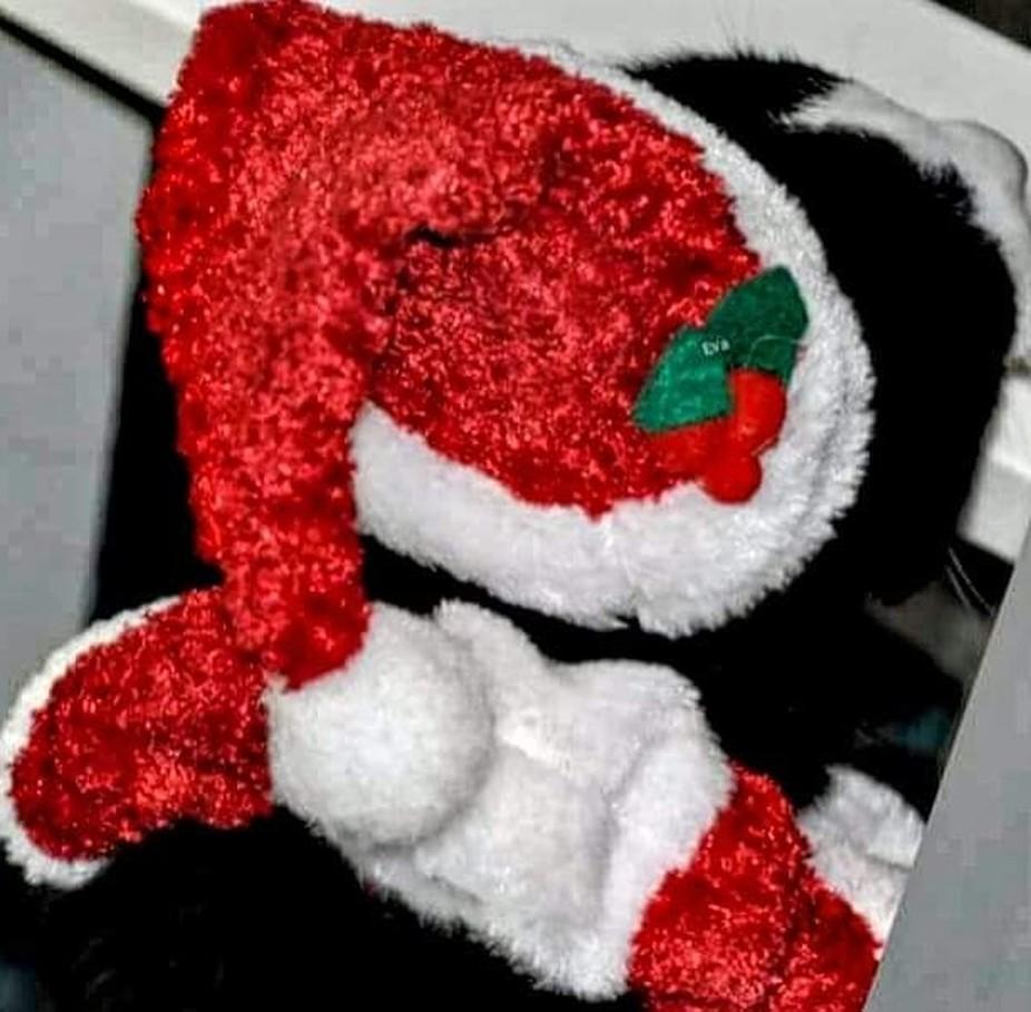 Ich wünsche euch allen eine schöne Weihnachtszeit