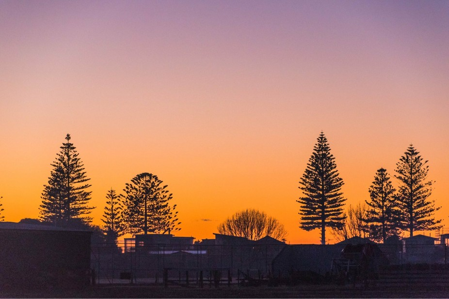 Silhouettes of trees at sunrise