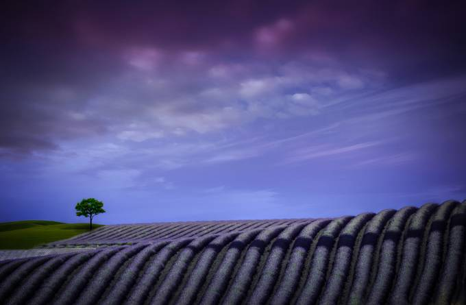 Valensole Dawn by alexanderhill - Shades Of Purple Project