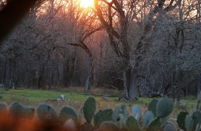 Afternoon in the blind.