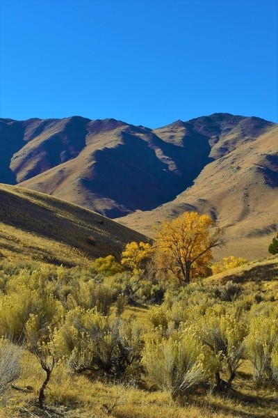 Autumn on the Range