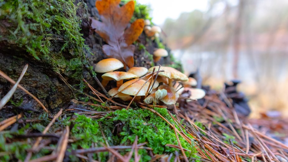 Captured these little guys hiding from the December wind and rain in a Dutch forest today A bitte...