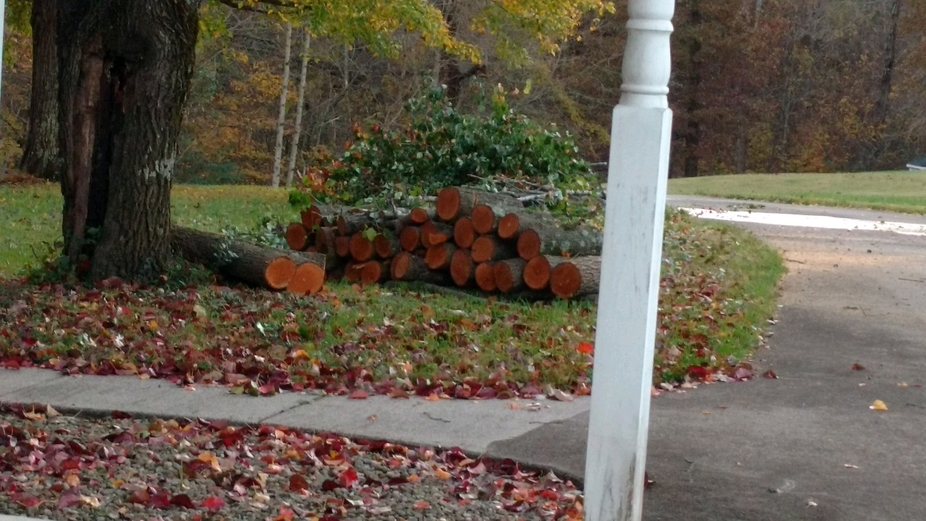 Making ready for warmth from a storm felled tree