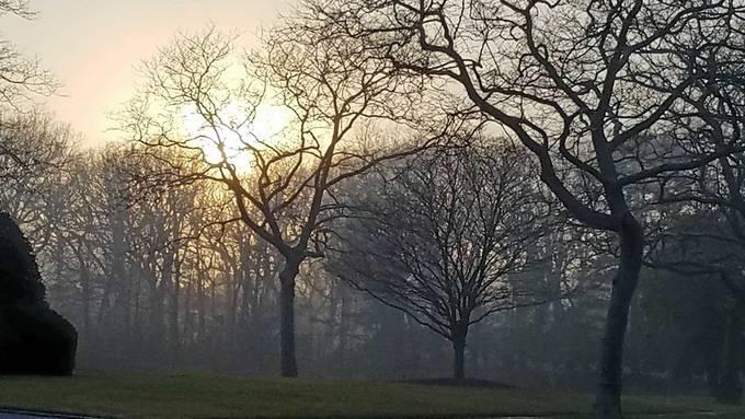 Amazing sunset and light while walking the dog