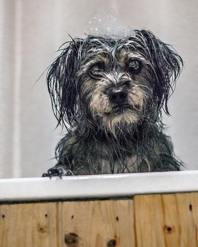 #nikon #nikonphotography #photography #streetphotography #suffolkphotographer #suffolkphoto #nikonlife #dog #cute #cutedog #dogphoto #dogphotography #doggie #bath #wetdog #nikon50mm #nikonlife #filmovermegapixels  #digitalphotography @cutedogsworldwide @l
