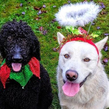 Best of both Penny & Mowgli - at Natalka & Wayne's - Dec 4, 2018
