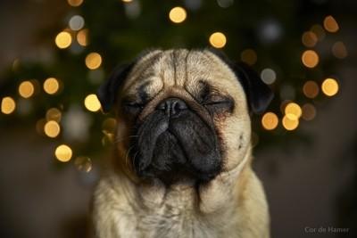 Have a zen Christmas