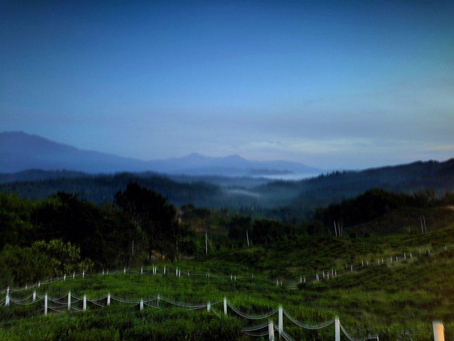 6am at sabah tea resort borneo.